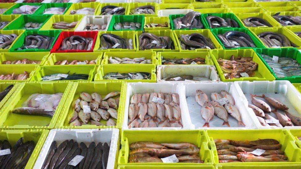 Proteger certas áreas do oceano pode aumentar a quantidade de frutos do mar, dizem os cientistas. Fonte: GETTY IMAGES.